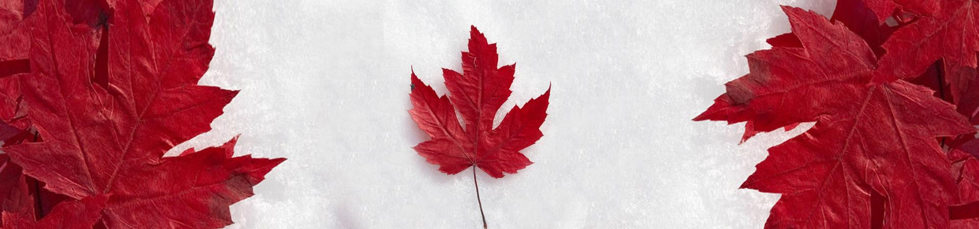 canadian flag with leaves and snow
